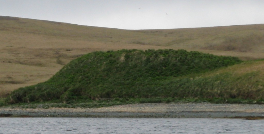 Site KIS-010 was a village on Kiska Island. It was most recently lived in c. AD 1600. The lowest levels 3 meters deep remain undated. (photo by C. Funk, 2009.)