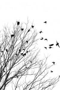 birdstrees_zpsxnhvoouo